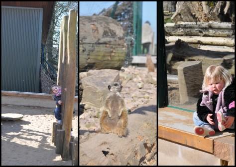 Fota Wildlife Park - Spielplatz