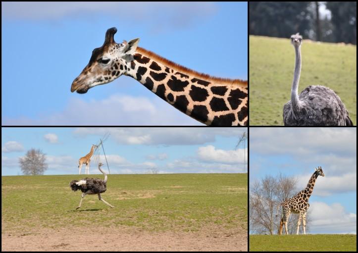 Fota Wildlife Park - Steppe 2