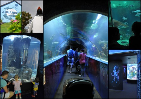 Aquarium in Dingle