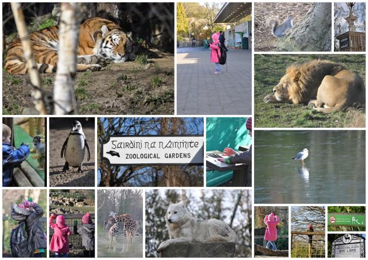 2015-02-01 - Dublin Zoo